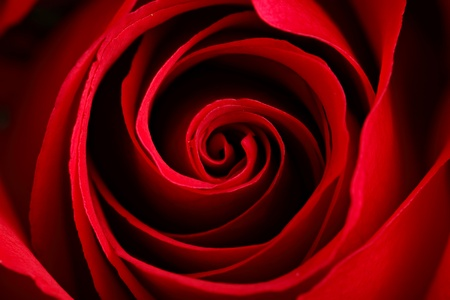 velvety: rose