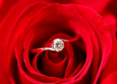 rose with ring Stock Photo - 12191844