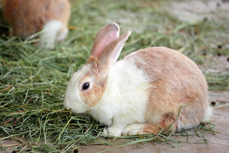 rabbit Stock Photo - 12557435