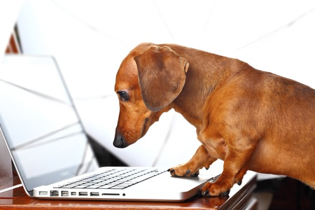 dog using computer photo