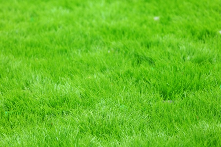 new spring green grass photo