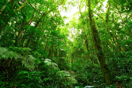 tropical rainforest: forest