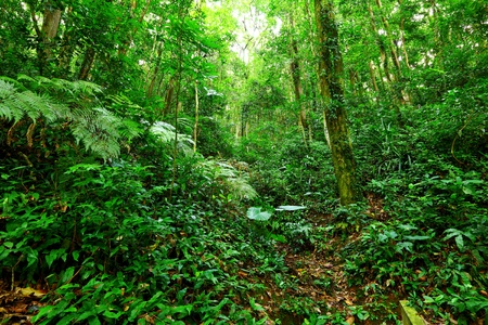 Tropical Rainforest Landscape Stock Photo - 12985103