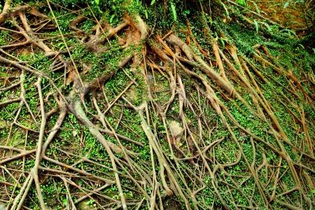 tree air root photo