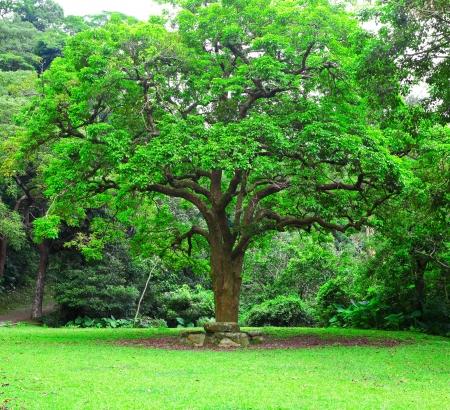 Grand arbre Banque d'images - 14887822