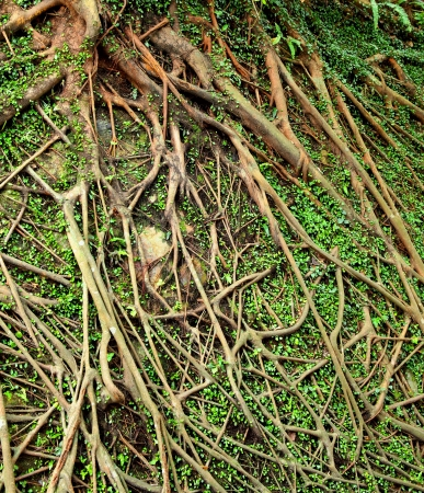 root tree background photo