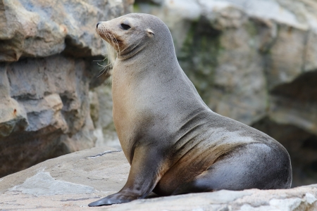 seal on rock Stock Photo - 17115518