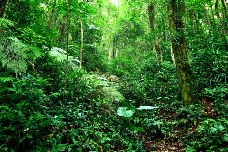 rain forest background: jungle
