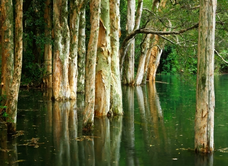 tree on water photo