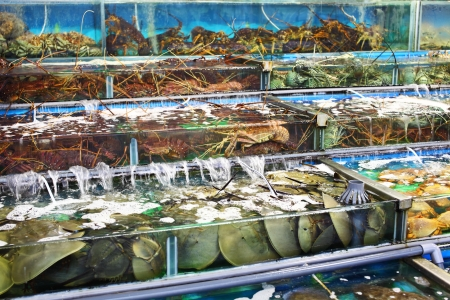 Seafood market in Hong Kong photo