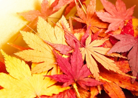 Autumn maple leaves background photo