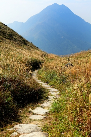 Path to mountain photo