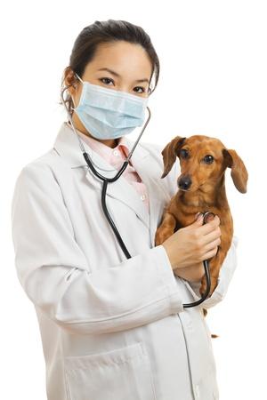 Aziatische dierenarts met teckel hond