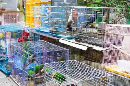 Bird for sell in bird park Фото со стока