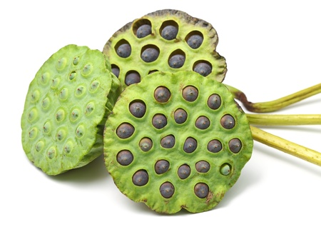 seedpod: Bouquet of Lotus seed pod