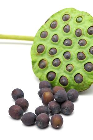 seedpod: Lotus seed and pod