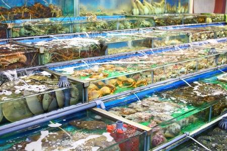 Seafood market fish tank in Hong Kong Stock Photo - 21608544