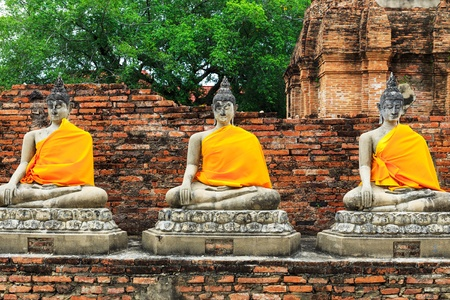 jade plant: Ancient Buddha in Ayuthaya, Thailand Stock Photo