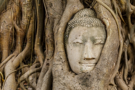 Buddha head in old tree close up photo