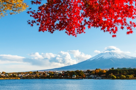 japanese maples: Mt. Fuji in autumn