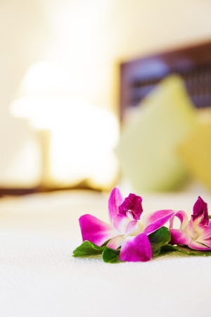 Pink orchid flower in hotel room photo