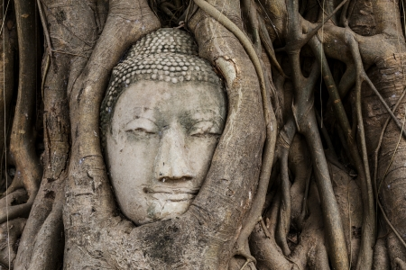 Buddha head in banyan tree photo