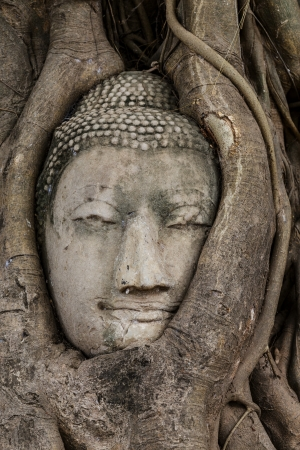 Buddha head in tree photo