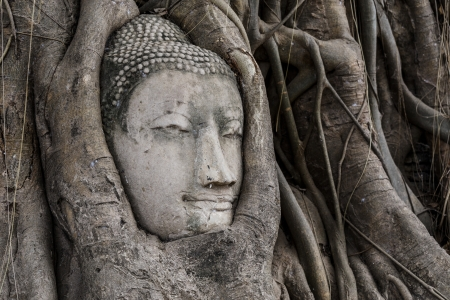 Buddha head in banyan tree at Ayutthaya photo