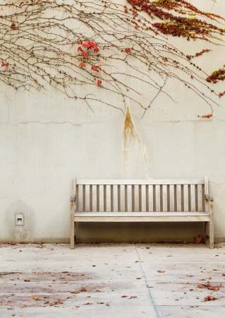 Relaxation with bench in garden photo
