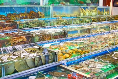 Seafood market fish tank in Hong Kong Stock Photo - 23899235