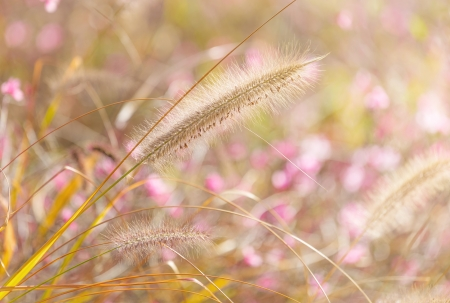wildness: Wildness grass Stock Photo