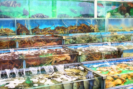 Seafood market fish tank in Hong Kong photo