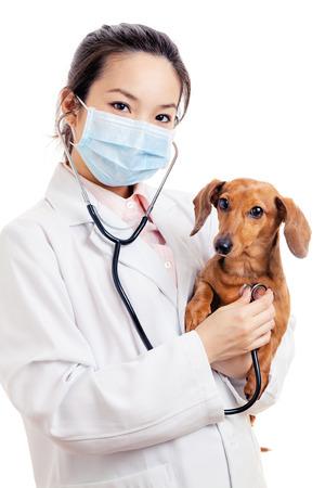 Aziatische vrouw dierenarts met teckel hond