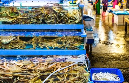 Seafood market fish tank photo