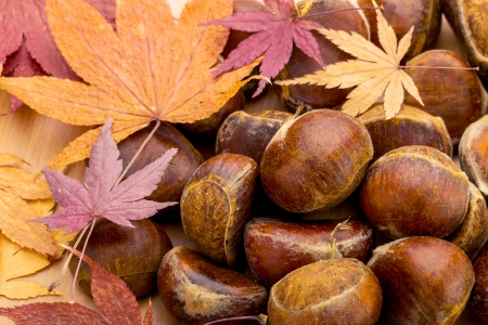 Chestnut and maple leave in Autumn