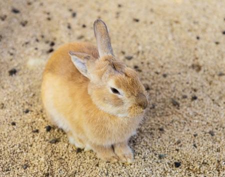 bunnie: Farm rabbit