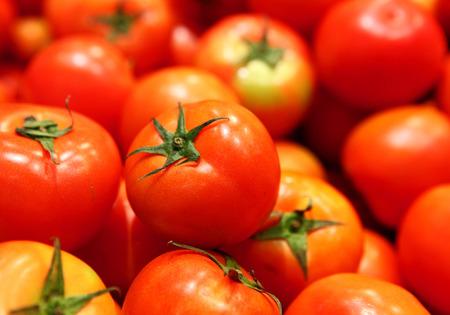domates: Group of tomato