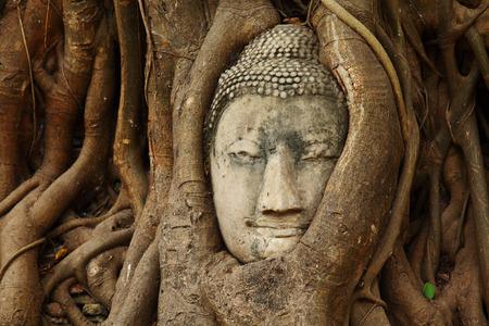 ayuthaya: Buddha head statue in tree root