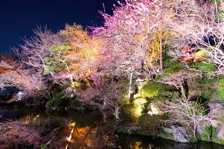 waterside: Sakura tree with river reflection at night