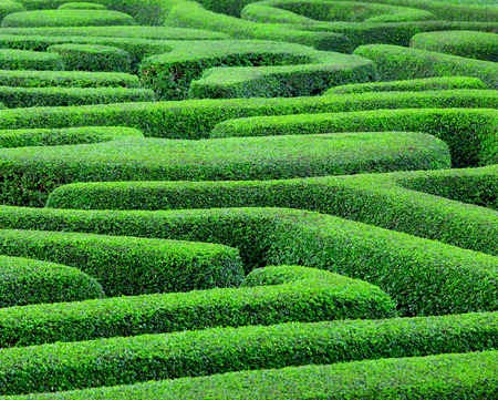quick hedge: Green maze Stock Photo