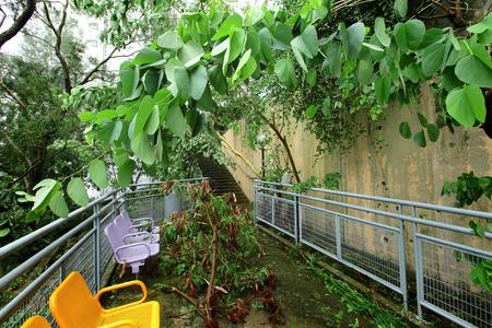 the aftermath: Typhoon damage Stock Photo