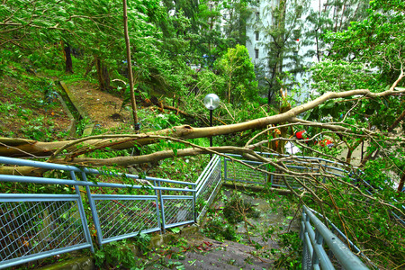 Tree collapse after typhoon photo