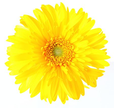 Yellow daisy photo