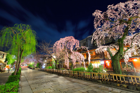 Gion in Kyoto with sakura tree at night photo