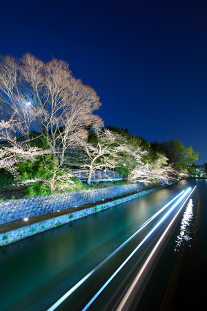 Biwa lake canal with sakura tree at night photo