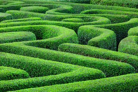 緑の植物の迷路 写真素材