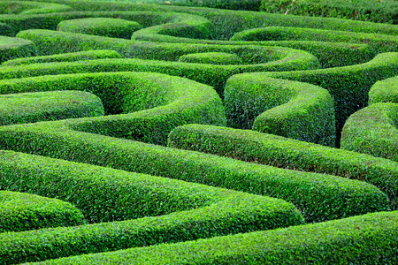 hedges: Green plant maze Stock Photo
