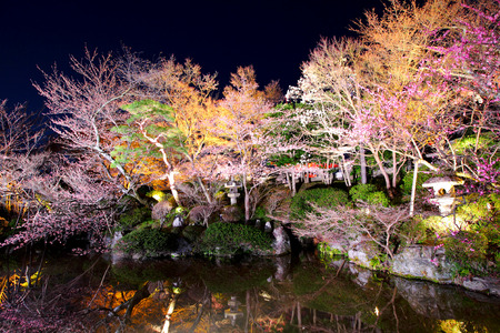 Sakura tree with river photo