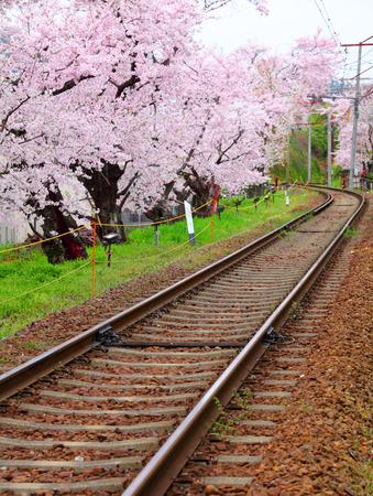 wood railroads: Sakura with railway Stock Photo
