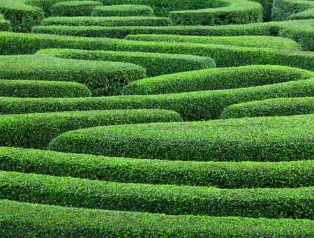 Groene plant doolhof